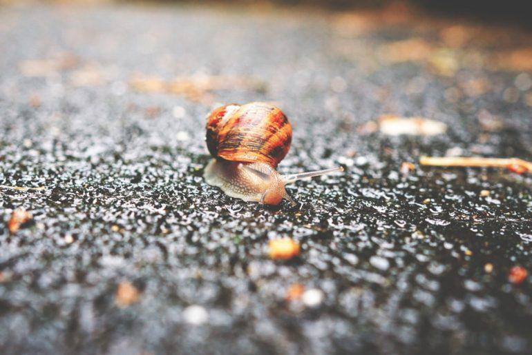 ¡Baja el ritmo! Únete al movimento Slow
