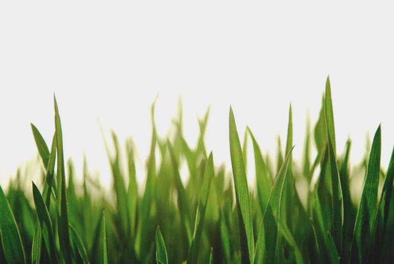 ¿Qué es el greenwashing? No todo lo verde es eco…