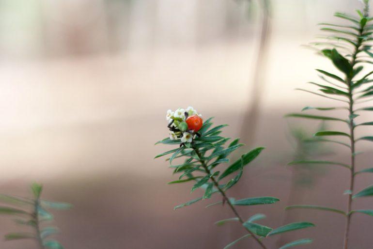 verde nerga naturaleza