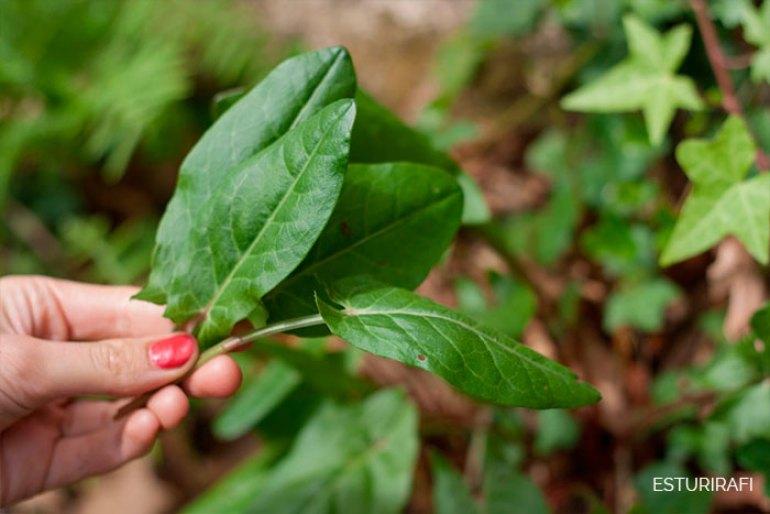 Receta ensalada de plantas silvestres