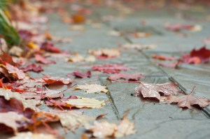 Why You Should Build Your Composite Deck in the Fall