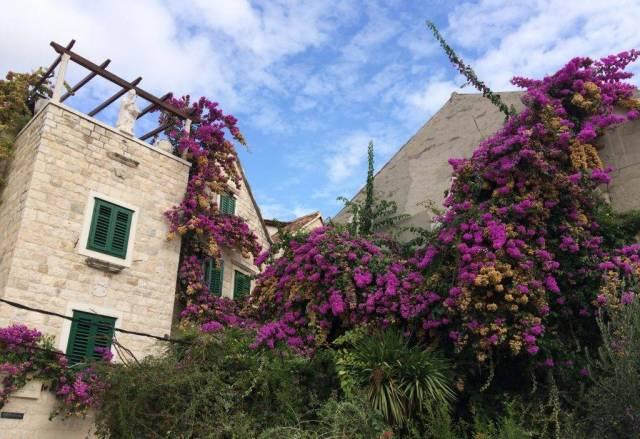Bunte Blumen an den Häusern auf Split