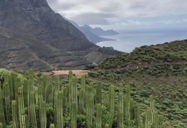 Klippen auf Gran Canaria in der Nähe von Agaete