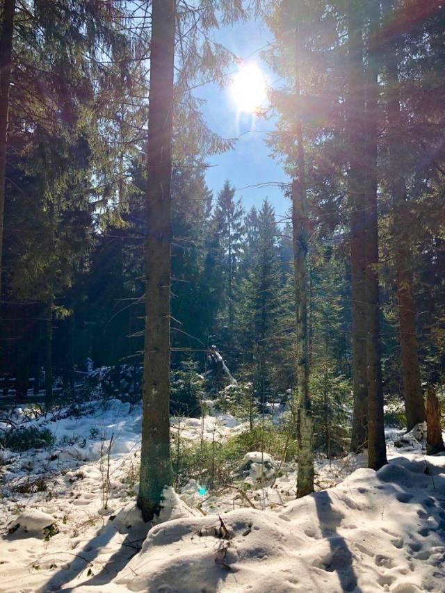 Harz im Winter mit Sonnenschein