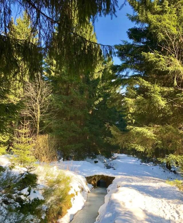blauer himmel, grüne Bäume und viel Schnee im Harz