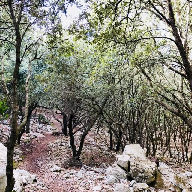 Steineichenwälder auf dem weg nach Estellencs