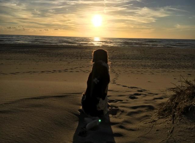 Sonnenuntergang mit Hund