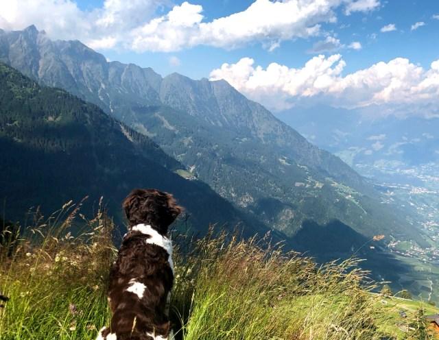 Wander mit Hund