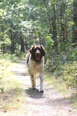 Mit Hund auf dem Heidschnuckenweg