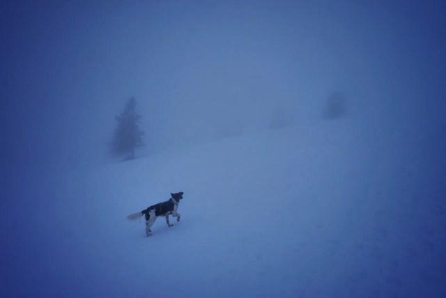 Hund im Nebel
