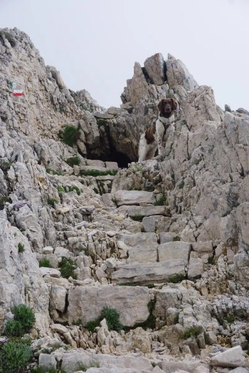 Bergwandern mit Hund