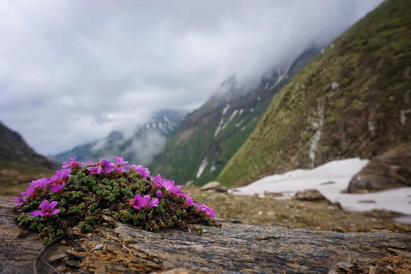 vielseitige Flora