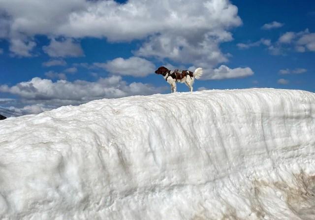 Hund Alpem