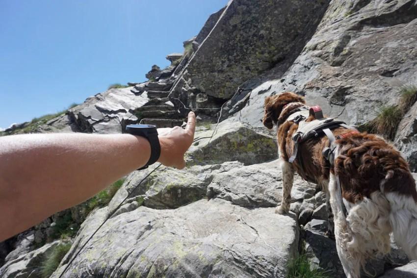 Befehle Hund Wandern