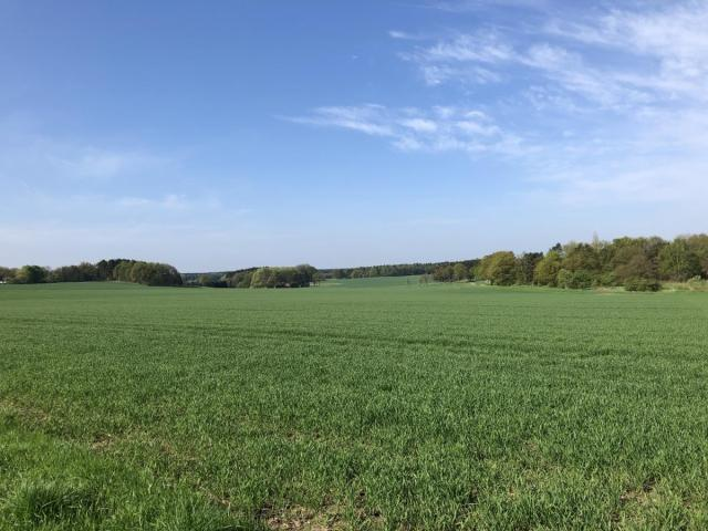 Landschaft am Heidschnuckenweg