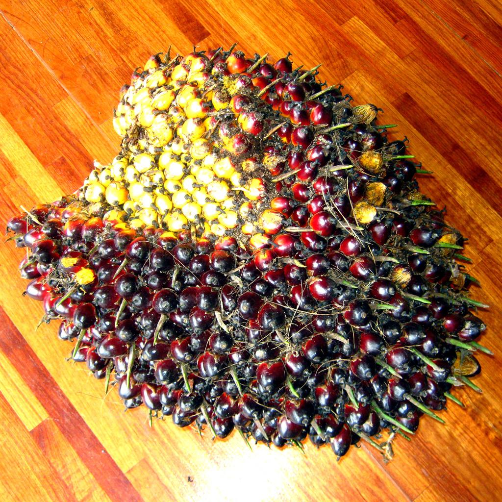 What Fresh Fruit Bunch