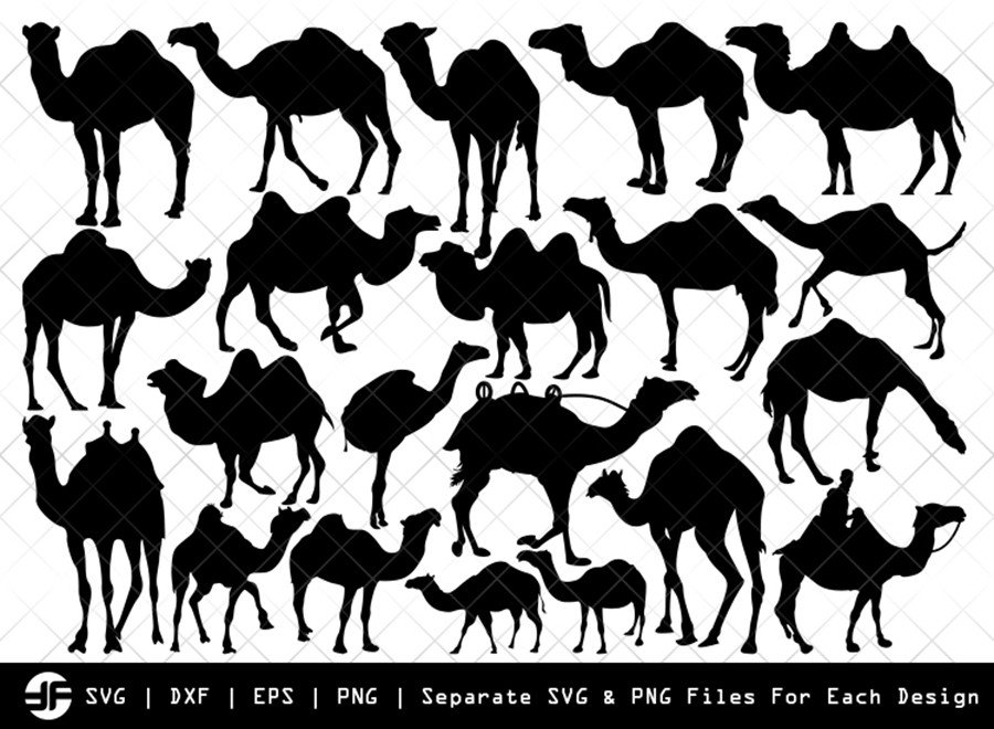 Camel SVG | Animal SVG | Silhouette Bundle | Cut File