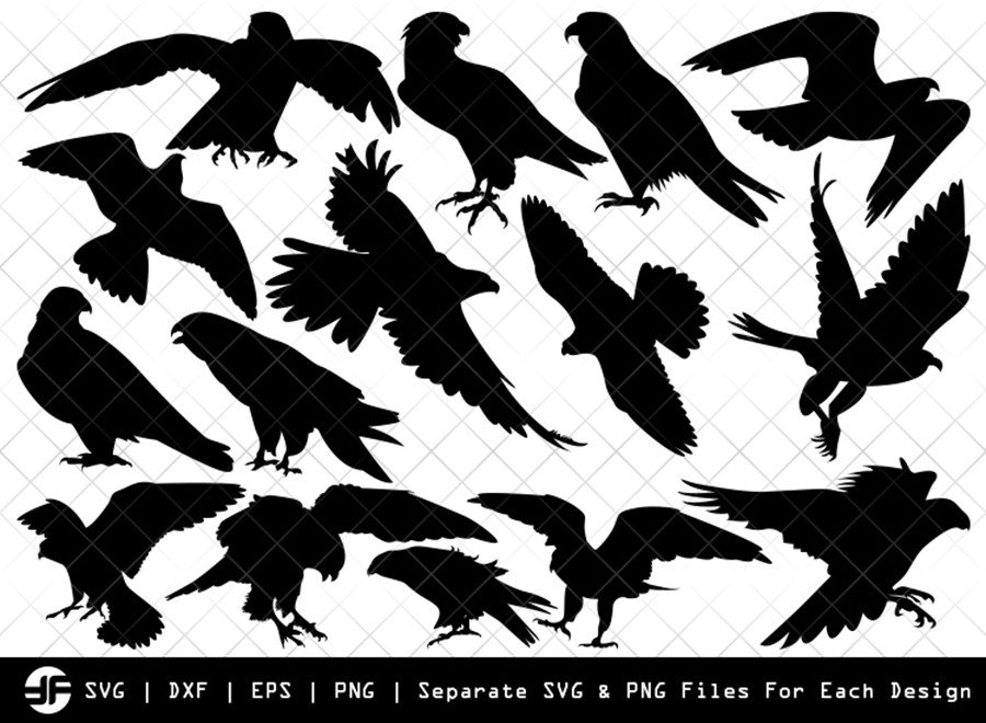 Falcon Bird SVG | Bird Silhouette | Bird Bundle | SVG Cut File
