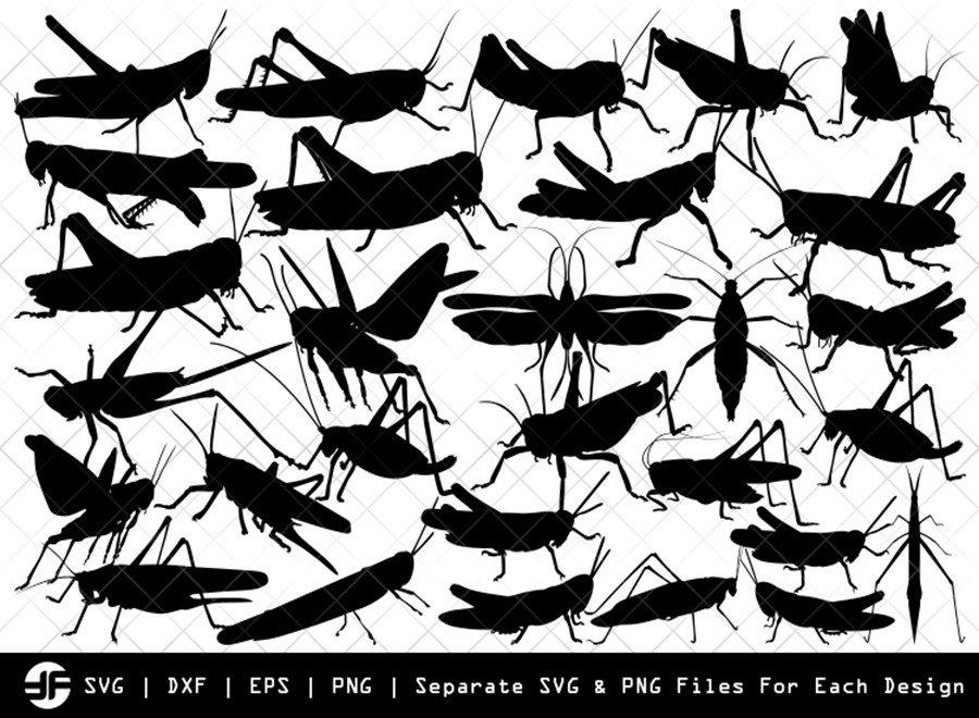Grasshopper SVG | Insect SVG | Silhouette Bundle | Cut File