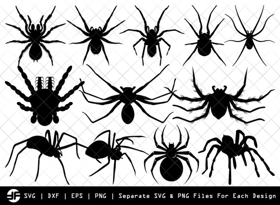 Spider SVG | Insect SVG | Silhouette Bundle | SVG Cut File