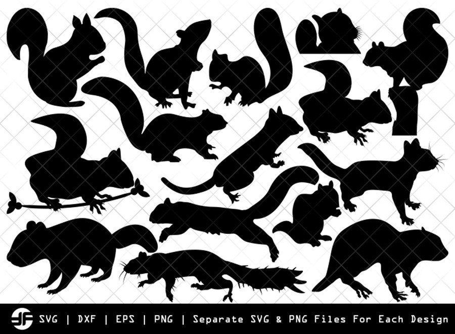 Squirrel SVG   Animal SVG   Silhouette Bundle   SVG Cut File