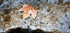 Amphiareion in Autumn (Fall) Eternal Greece Ltd