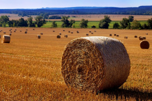 Don't let roll yield erode your commodity returns
