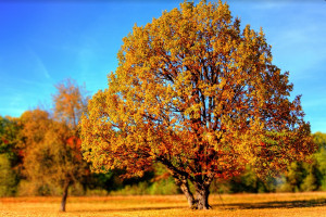 Autumn breezes: Five investing themes to consider