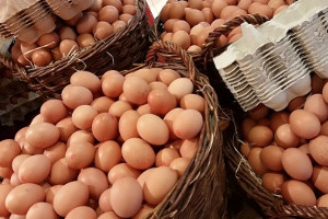 Seeking yield? Don't put all your eggs in one (income) basket