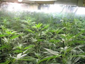 06102009-grow_house