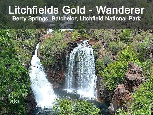 Darwin Tour - Litchfields Gold Wanderer