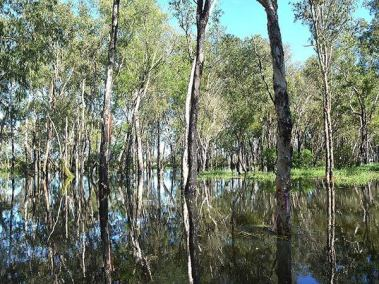 Flooded creek - Best in the wet by ethical adventures