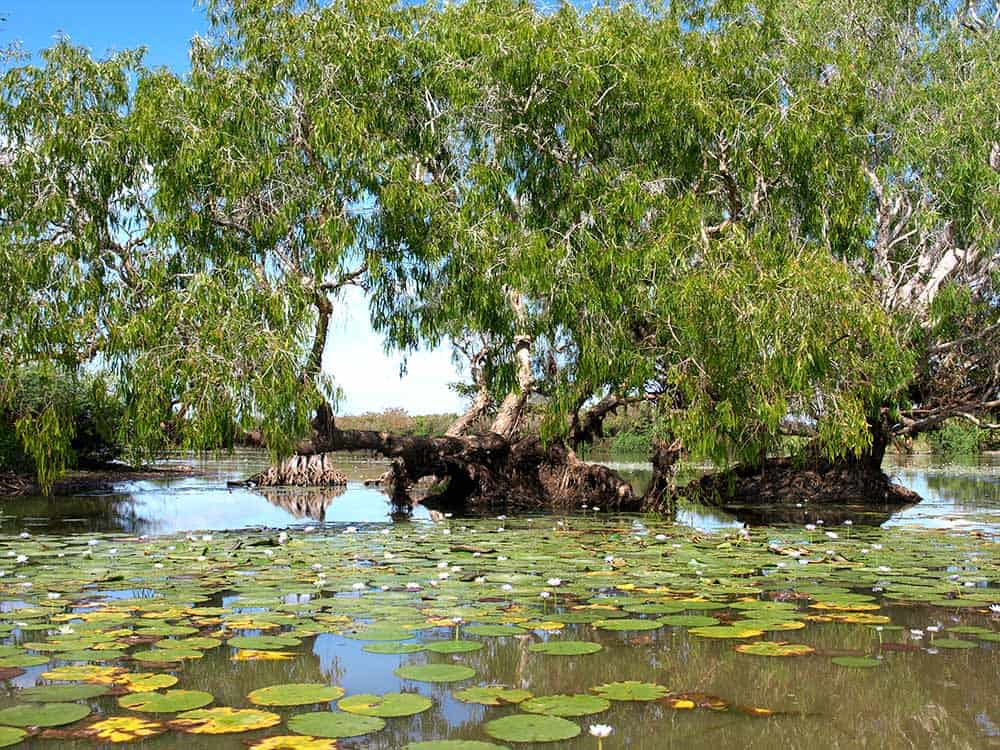 Top End wetlands