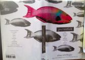 Parrotfish by Ellen Wittlinger 2007: Simon & Schuster Books for Young Readers ISBN: 9781416916222