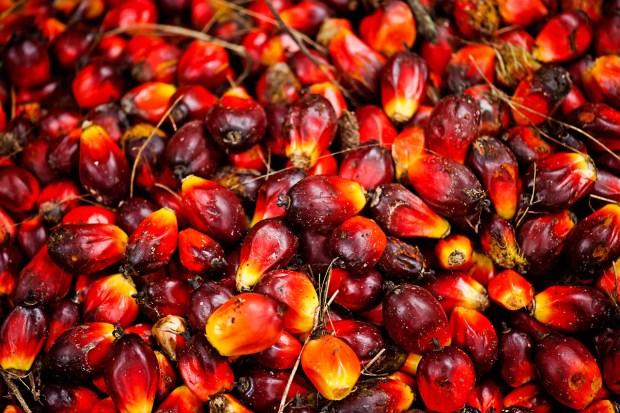 huile-de-palme-fruit-2
