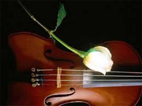 violino con rosa bianca