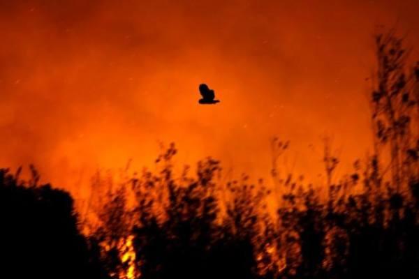 UCCELLI PIROMANI: bruciare per cacciare.