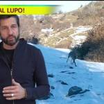LUPI ITALIANI: QUANTE BUFALE IN UN SOLO VIDEO!