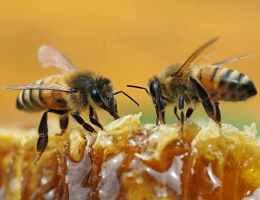 mappa distribuzione api