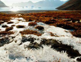 permafrost e i suoi segreti