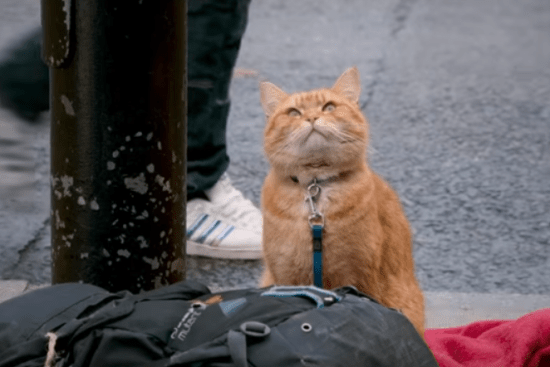 Streetcat Bob on the street