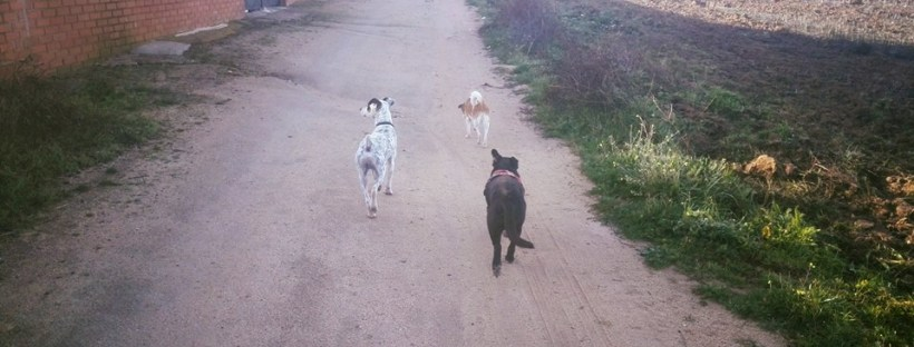 perros paseo