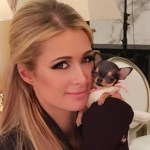 Paris Hilton Gets Adorable Teacup Chihuahua And Needs Help Naming The Lil Cutie Entertainment Tonight