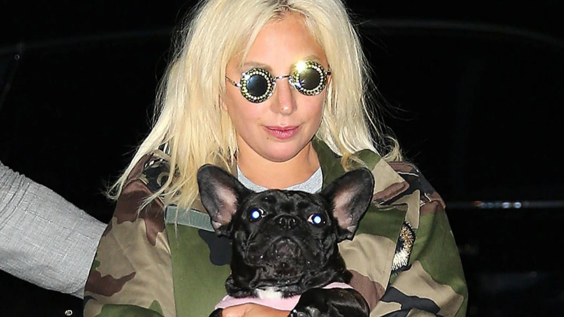 Lady Gaga Offers $500,000 For Return Of Her Two Stolen French Bulldogs