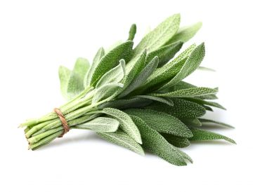 20 bienfaits de la sauge officinale