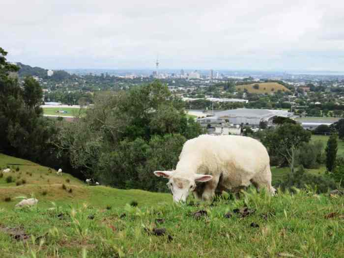 Auckland - One Tree Hill 2016 ©Etpourtantelletourne.fr