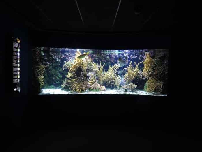 Aquarium La Rochelle 2016 ©Etpourtantelletourne.fr