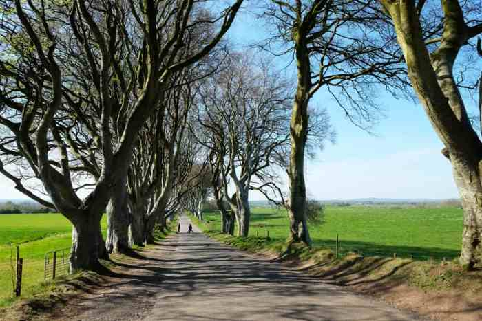 Itinéraire sur les lieux de tournage de Game of Thrones en Irlande du Nord - The Dark Hedges - la route royale ©Etpourtantelletourne.fr