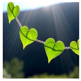 Cohérence cardiaque - David O'Hare - Être Soi