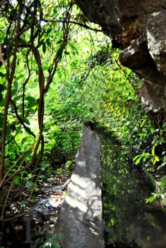 trois bassins - bassins cormoran - bassin des aigrettes - bassin malheur - balade facile reunion - etre soi
